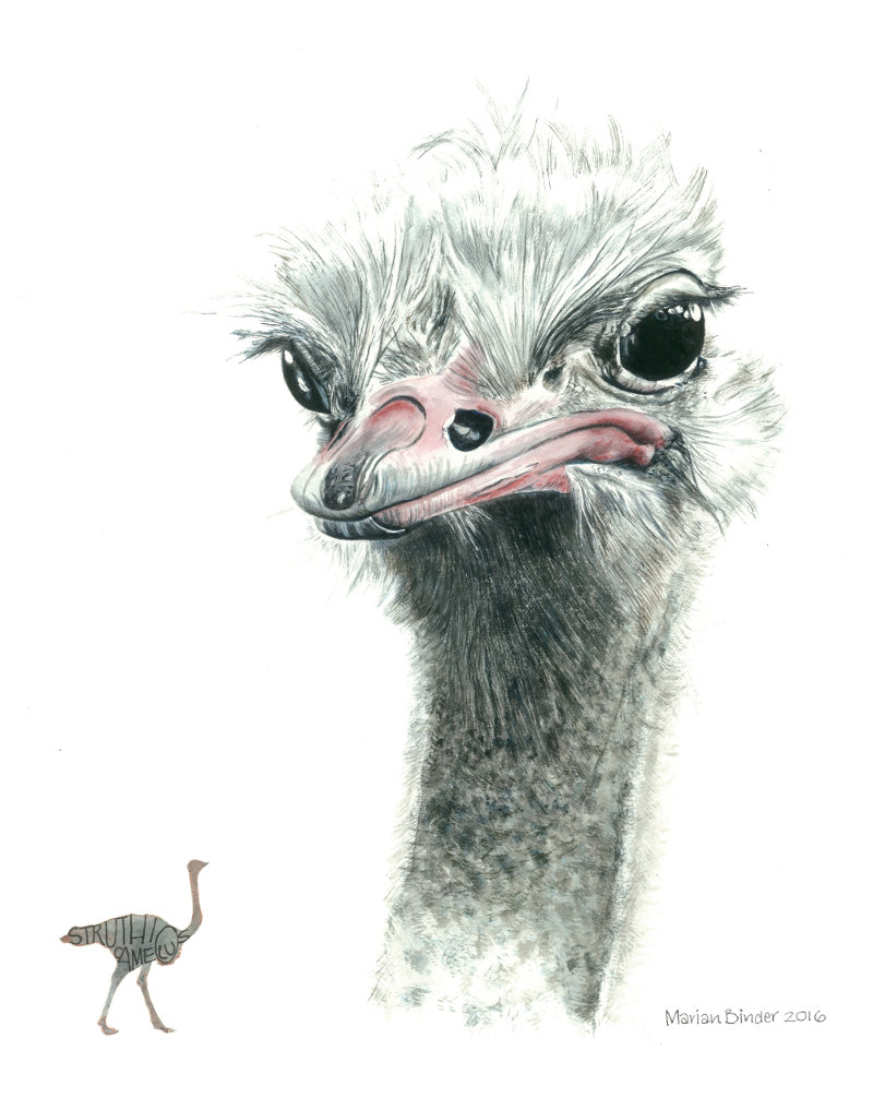 Favourites Ostrich painting Made Marian Pomegranite Online Presence Consultancy