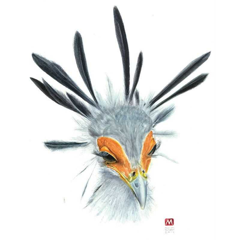Made Marian Secretary-bird Pomegranite Online Presence COnsultancy one of our favourites